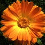 tot-bloe-brengen