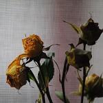 Gezamenlijke zelfdoding weinig romantisch